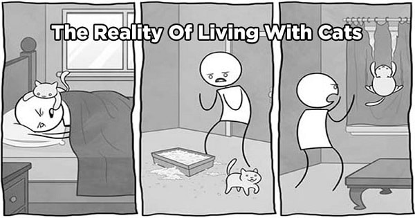 12 Hilarious Comics Which Reveal The Reality Of Living With Cats!