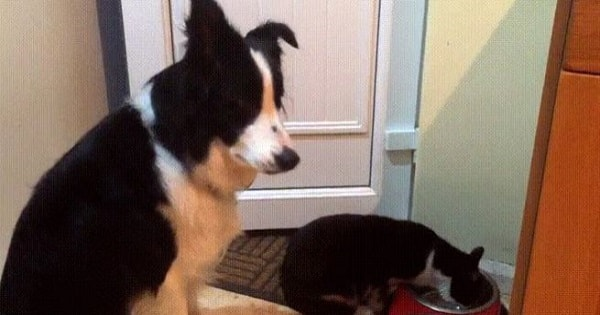 This Dog Simply Cannot Believe The Cat Is Eating Its Food!