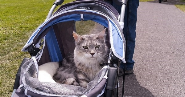 The 10 Signs Your Kitty Might Actually Be Your Baby!