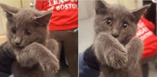 Massachusetts State Trooper Goes The Extra Mile Shutting Down Traffic To Save Kitten From ...