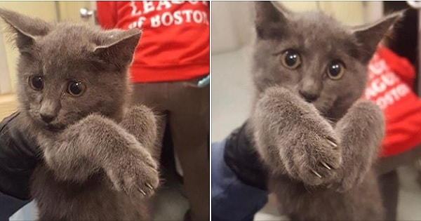 Massachusetts State Trooper Goes The Extra Mile Shutting Down Traffic To Save Kitten From …