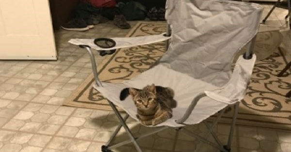 Man Arrives Home To Find A Cat Laying In His Chair, However – He Doesn't Own a Cat!