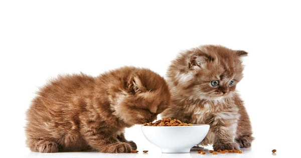 """'My Cat is Doing Just """"Fine"""" on Dry Food '! You Couldn't Be More Wrong!"""