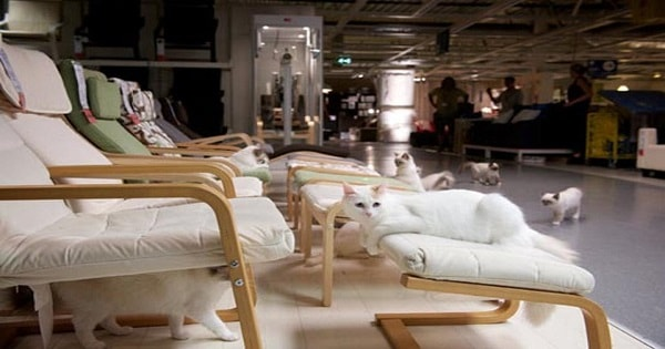 100 House Cats Visited IKEA And You Won't Believe What They Did To The Store