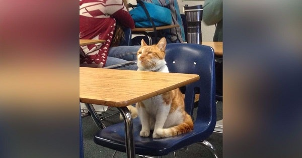 Cat Loves School So Very Much That He Has His Own Student …