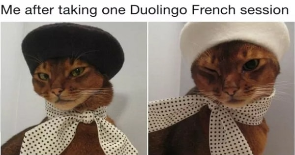 23 Of The Most Hilarious Cat Tweets In Existence!
