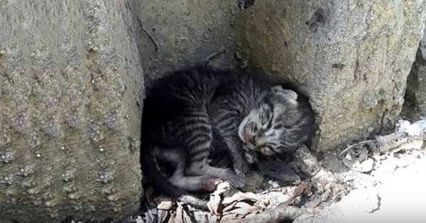 Poor Homeless Cat Was Lying All Day on the Street until Finally a Hero Appeared….