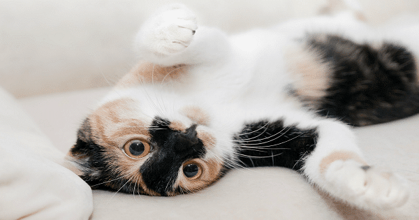 Litter Box Tips and Tricks to Keep Your Kitties Happy