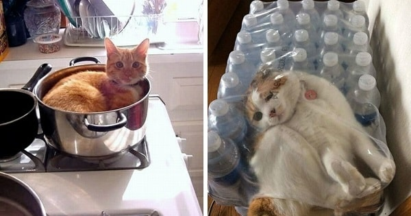 10+ Cats Who Exactly Know How To Gain Attention