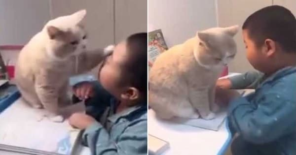 Cat Stops Young Boy From Doing His Homework In Cutest Video Ever!