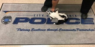 MEOW! - Kitty Simply Strolls Into Police Department And Begins Posing ...