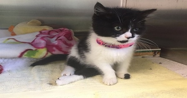 Watch This Paralyzed Kitten Takes Her First Steps!
