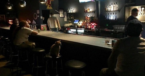 Cat Walks Into A Bar One Night - Sounds Like A Joke - But It's Not!