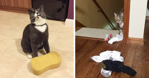 10+ Cats Who Have Brought Unexpected Gifts For Their Humans!