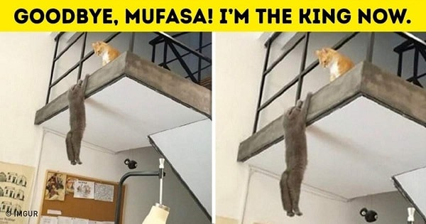 10+ Hilarious Pictures Showing The Secret Life Of Pets