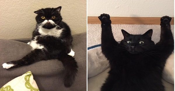 10+ Cats Who Are Unaware Of Just How Silly They Are!