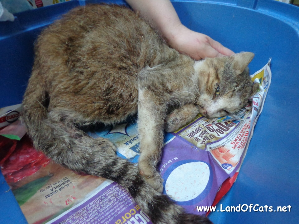 Senior Feral Cat Walks Up To Woman And Asks For Help 1