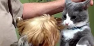 15 Cats Who Simply ARE NOT Afraid Of Dogs - And They're Not Taking Any Of Their SH$T!