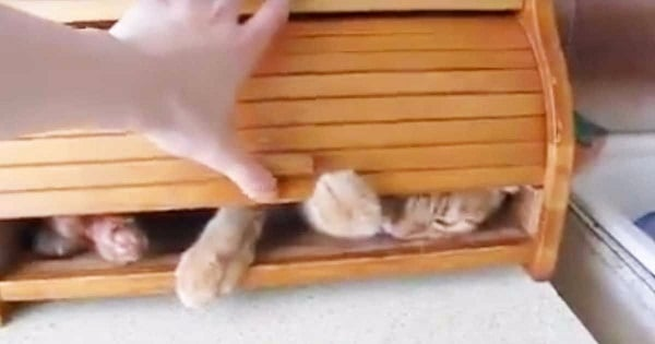 Watch The Adorable Kitty REFUSE To Come Out Of A Breadbox!