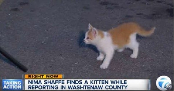 Street Cat Interrupts Live TV Broadcast and Steals the Spotlight of Course!