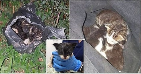 Six week-old Kittens Were Shoved Into A plastic Bag, Thrown Onto Train Tracks And Left For Dead!