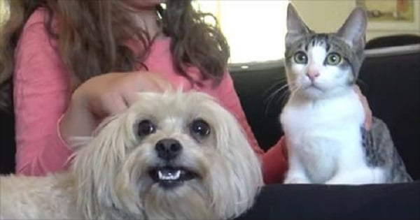 Nuns Cared For This Homeless Cat And Dog Until Finally …
