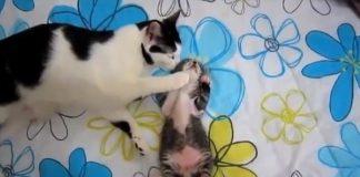 Poor Kitten Was Having A Terrible Nightmare Until ...