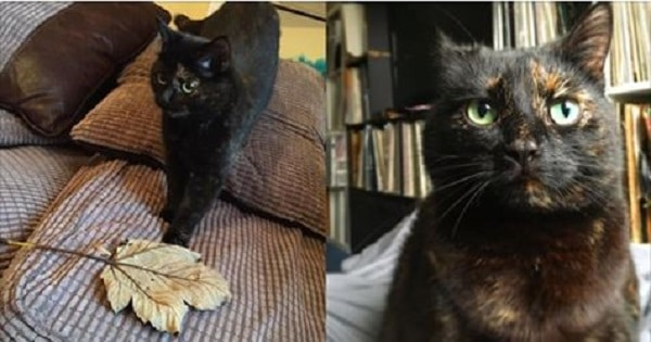 This Beautiful Cat Brings Her Human A Special Kind Of Gift, Each And Every Day!