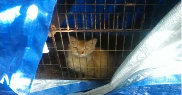 This Cat Was Confined To A Bird Cage For A Long Time, But That All Changed When ...