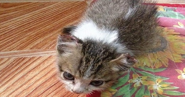 Kitten Rescued After Monsters Sewed Her Eyelids, Ears And Nose!