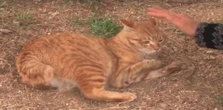 """Poor """"Broken"""" Cat Was Rejected By Absolutely Everyone Until ..."""