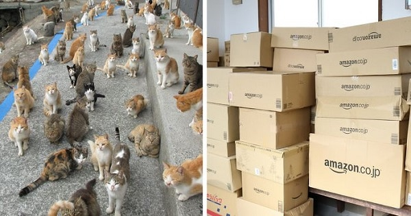 Japan's Cat Island Asked The Internet For Food - That's All It Took!