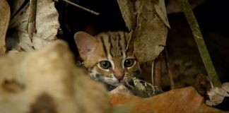 Behold! The World's Deadliest Cat Is Soo Adorable!