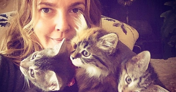 Actress Drew Barrymore Adopts 3 Kittens Despite Initially Planning on Adopting Only One!