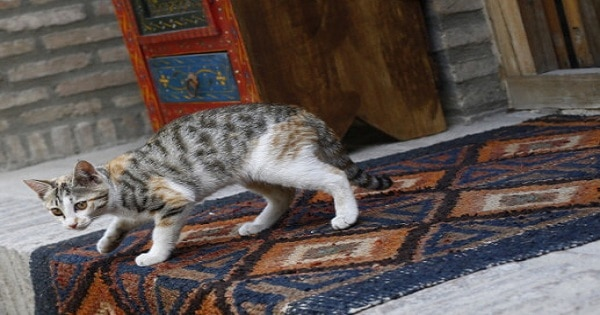 Loe And Behold! There Is A Reason Your Cat Coughs Up Hairballs On The Carpet!