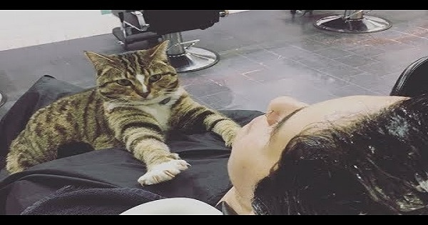 This Gorgeous Cat Helps Running A Salon - And Never Takes A Day Off!