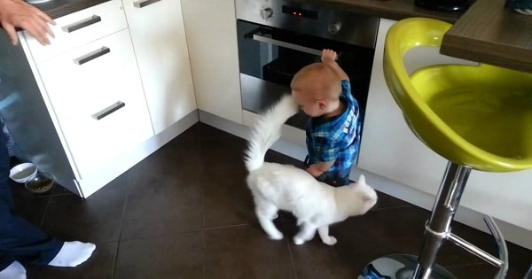 Protective Pet Cat Saves Child From Getting Burned By An Oven!