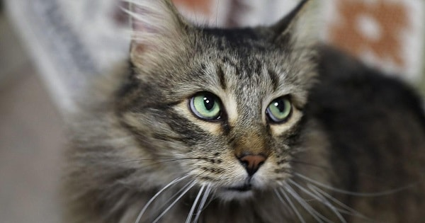 Cat Escapes From Home, And The Original Shelter Won't Give Him Back To The Owner!