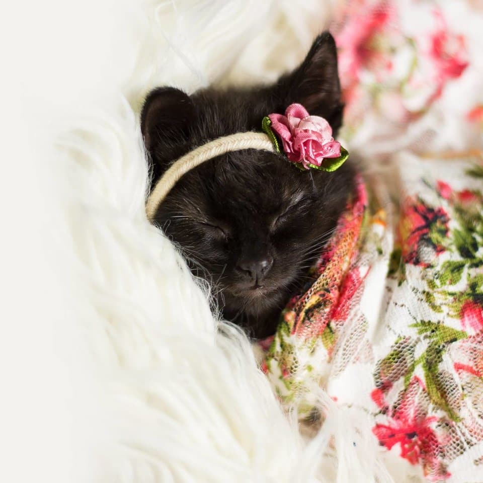 Woman Does Newborn Photo Shoot With Kitten, And The Pictures Have Stolen Our Hearts 1