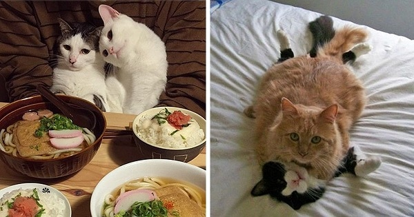 10+ Cats Who Are Completely Ready For Valentine's Day!