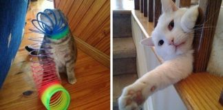 10+ Cats Who Failed Big Time