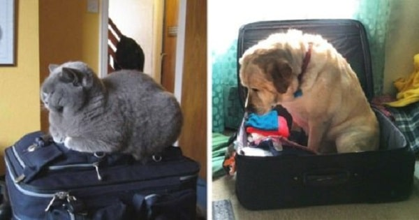 These Pets Won't Leave Their Humans Go On A Vacation!