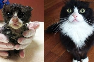 10+ Pictures Showing Stunning Recovery of Rescued Cats— The Transformation Is Truly Incredible