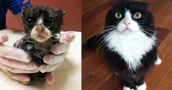 10+ Pictures Showing Stunning Recovery of Rescued Cats