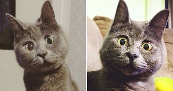 This Permanently Surprised Cat Wasn't Supposed To Survive, Now He's 4 Years Old
