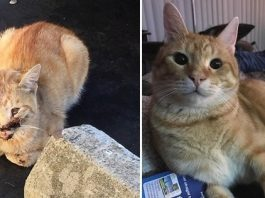 Woman Spends Thousands Of Dollars To Save A Homeless Cat!
