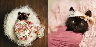 Woman Does Newborn Photo Shoot With Kitten, And The Pictures Have Stolen Our Hearts