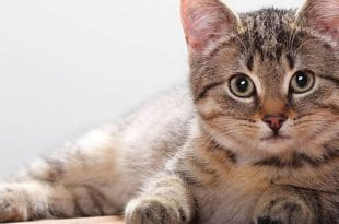 Your Cat Will Sit In One Spot With This Easy Trick. Here's How Scientists Say It Works