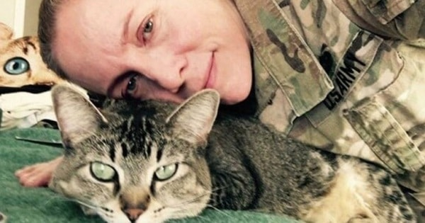 This Soldier And Kitty Have Been Inseparable For The Last 4 Years
