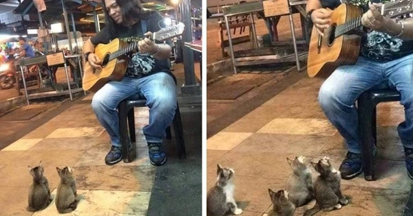 4 Kitties Who Obviously Love Music Come To Listen To The Street Singer Everyone Else Ignored!